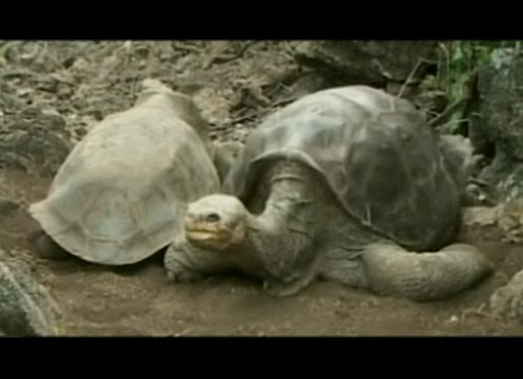 National Geographic Now - Lonesome George