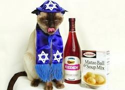 passover-video
