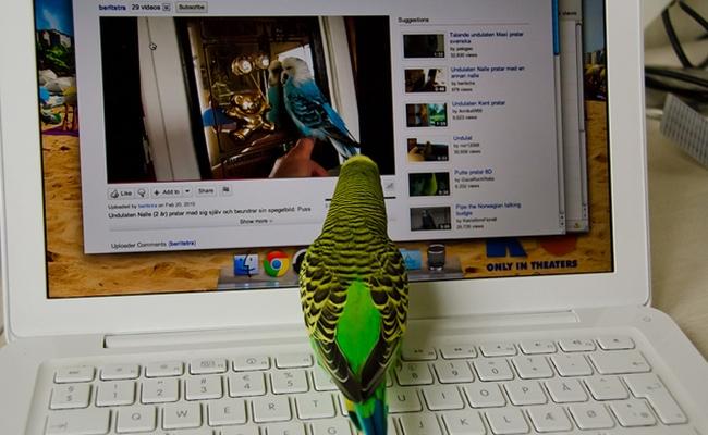 bird-comscore