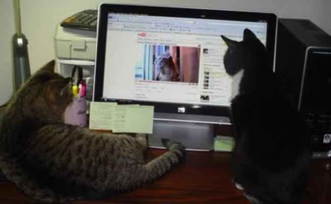 cats-watching-cats-on-computer