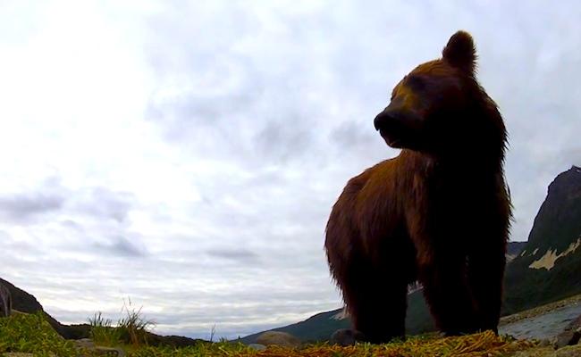 bear-go-pro