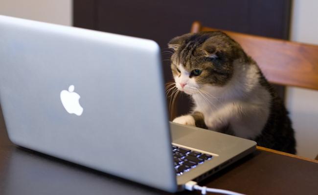 cat_using_computer