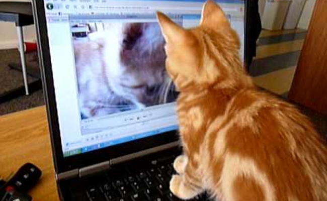 cat-watches-youtube
