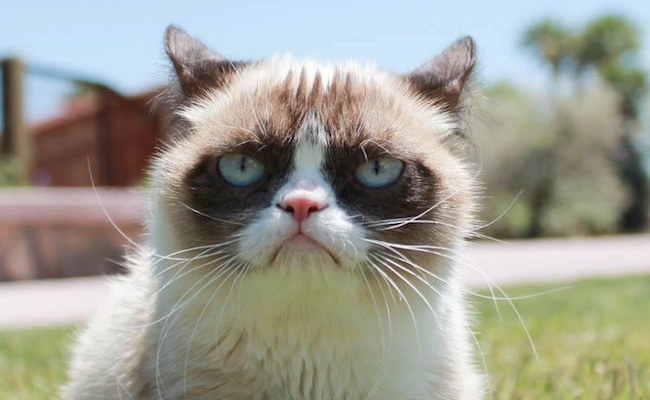 Did you know grumpy cat has a movie deal thecheapjerseys Image collections
