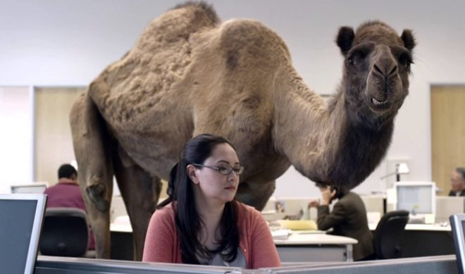 Geico's Hump Day Ad Gets Two Thirds Of Its Shares On Wednesday