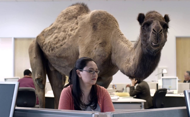 geico-hump-day-camel