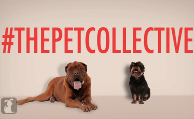 the-pet-collective