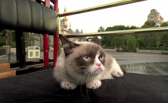 grumpy-cat-disneyland