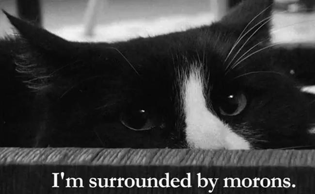 henri-le-chat-noir