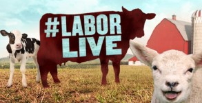 Animal Planet To Stream Live Animal Births For The Labor Day Weekend by Bree Brouwer for Tubefilter