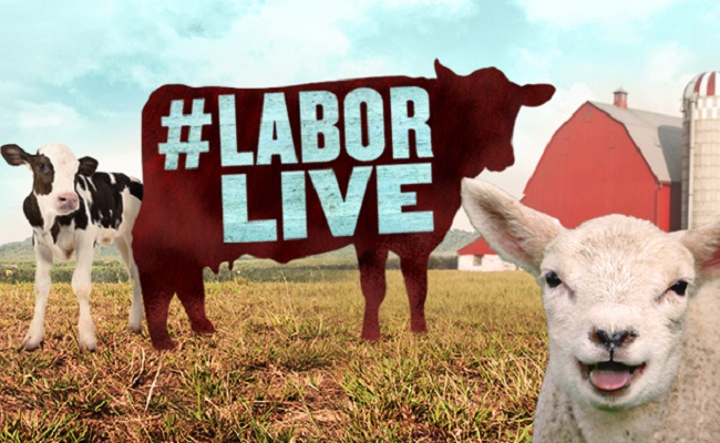 Animal Planet To Stream Live Animal Births For The Labor Day Weekend