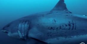 discovery-shark-week
