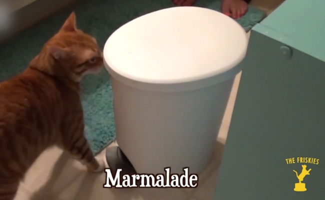 Here Is The Best Cat Video Of The Year