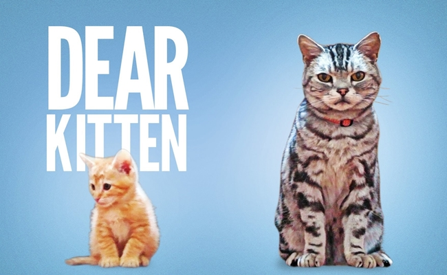 dear-kitten-buzzfeed