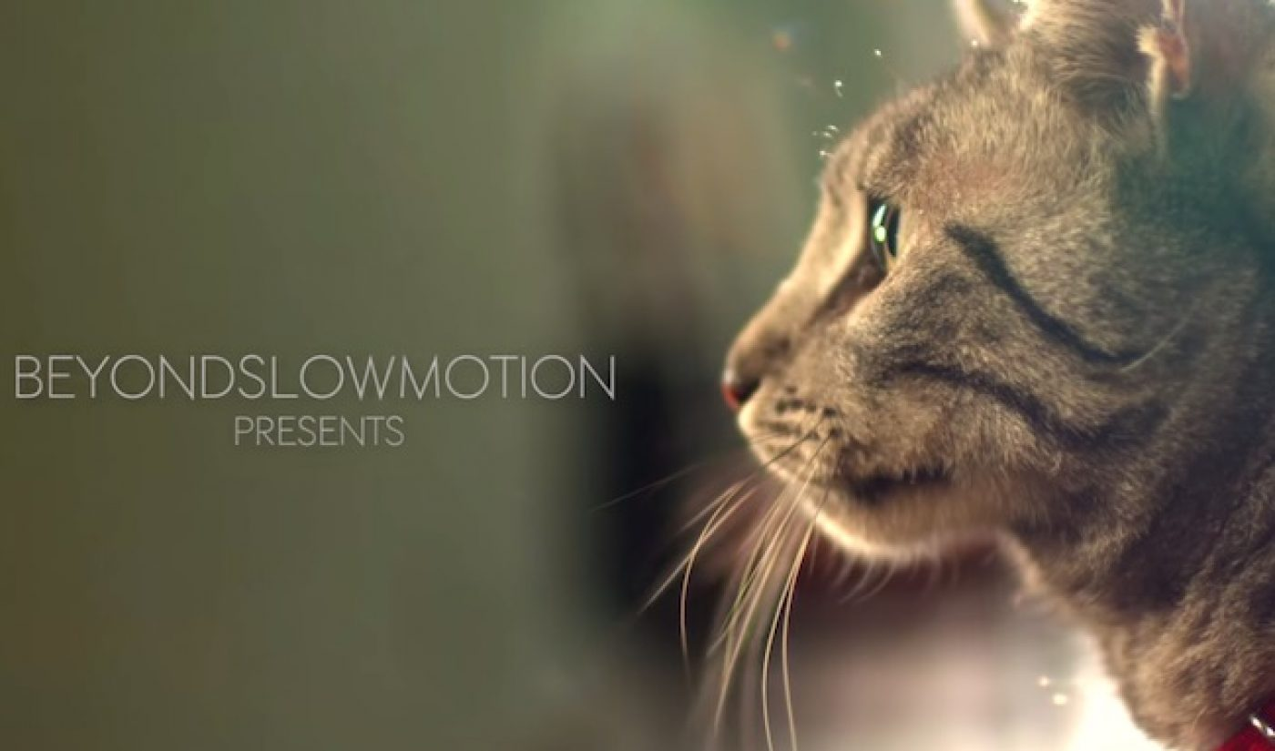 Purina Teams With BeyondSlowMotion For Branded Cat Video Campaign