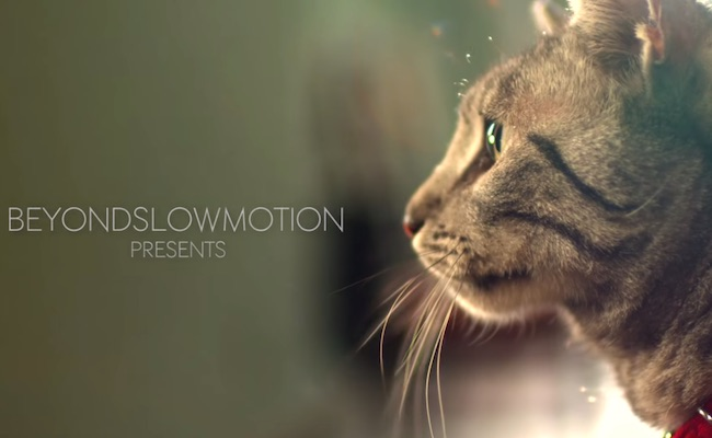 beyond-slow-motion-cats-purina