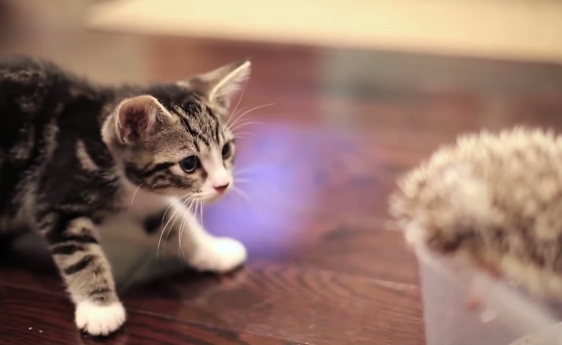 cute-kitten-purina-youtube