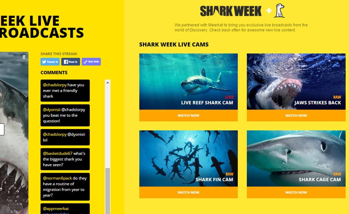 shark-week-meerkat