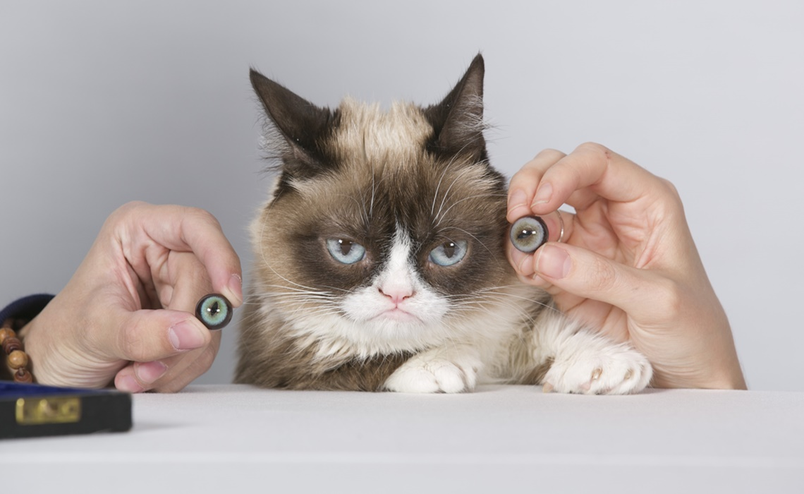 Grumpy Cat Sitting for Madame Tussauds San Francisco