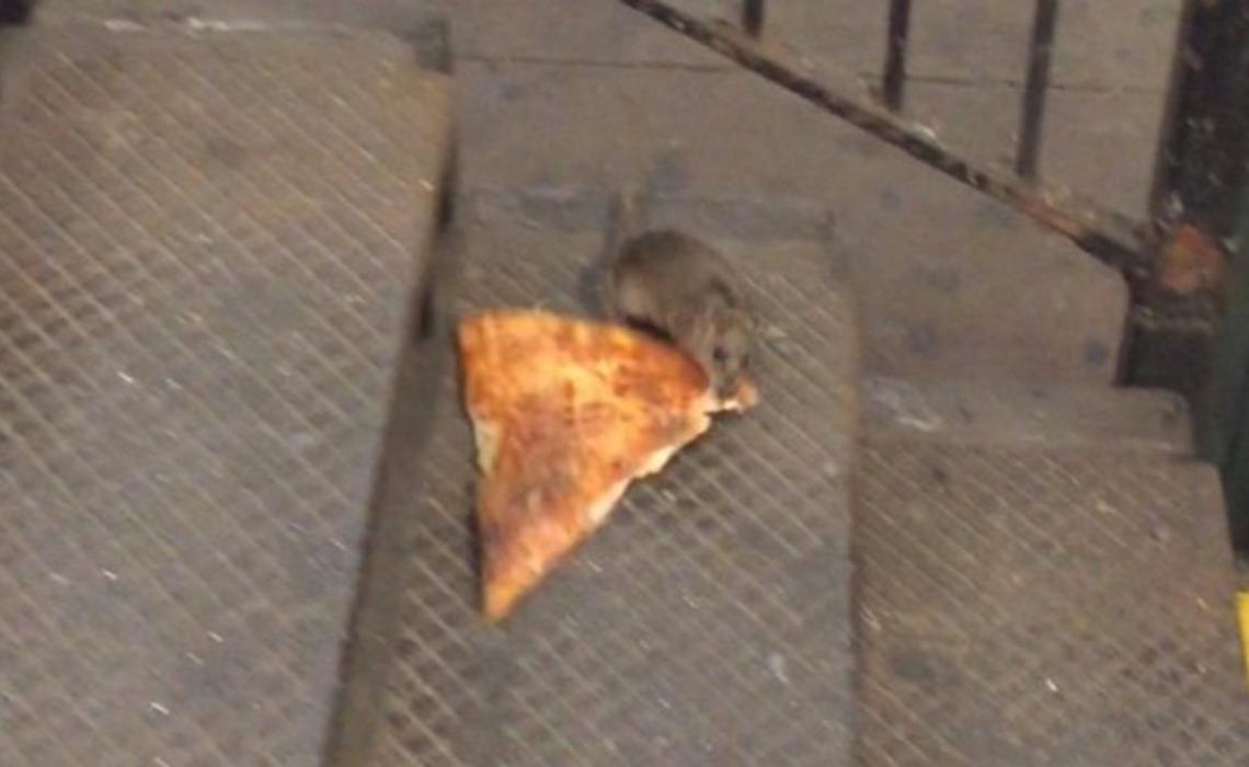 Anatomy Of Viral Videos: \'Pizza Rat\' Vs. \'Boston Sunfish\' - Tubefilter