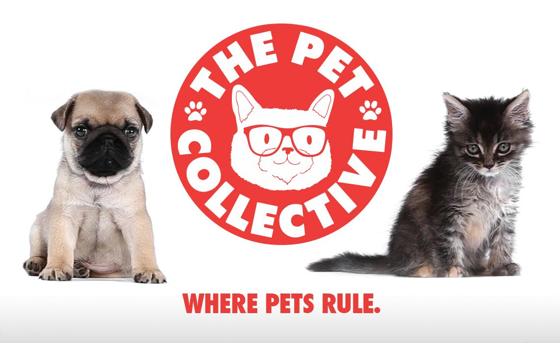 pet-collective-yt