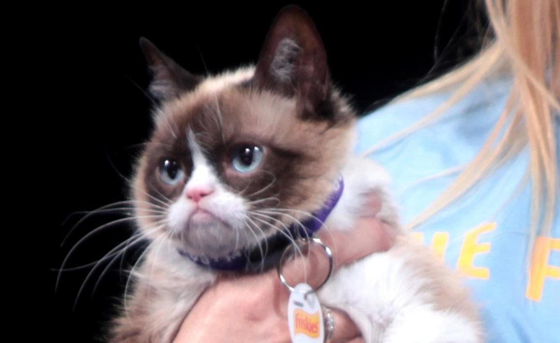 Grumpy Cat Streaming