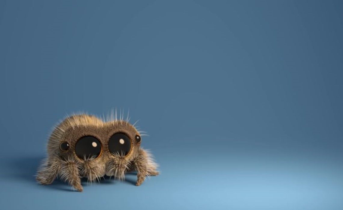 Equal Parts Creepy And Cute Lucas The Spider Is Weaving Viral