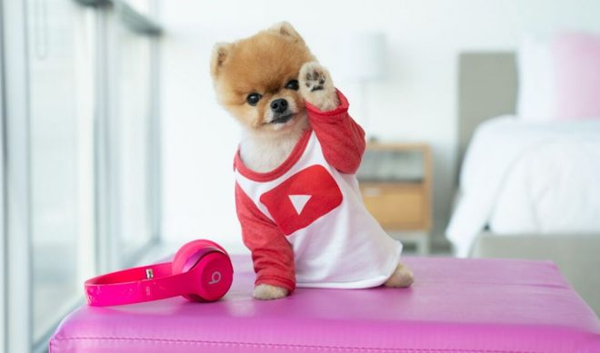 Famed Pomeranian Jiffpom Signs With Made In Network, Relaunches YouTube Channel