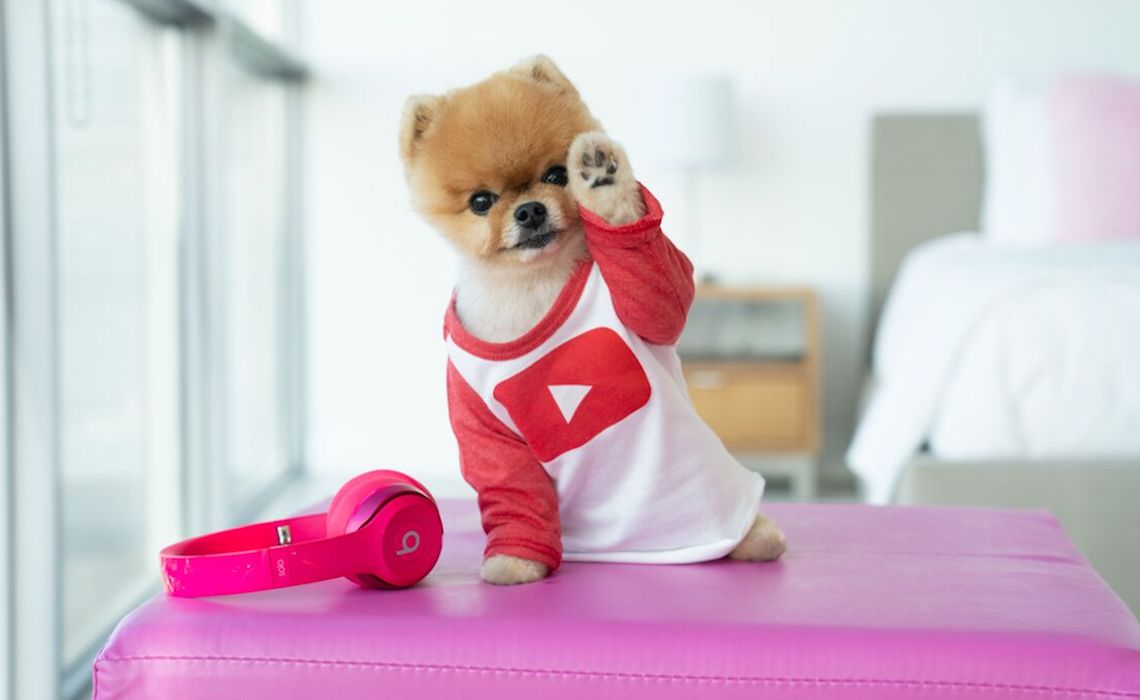 Social Media Famous Pomeranian Jiffpom Signs With Made In Network