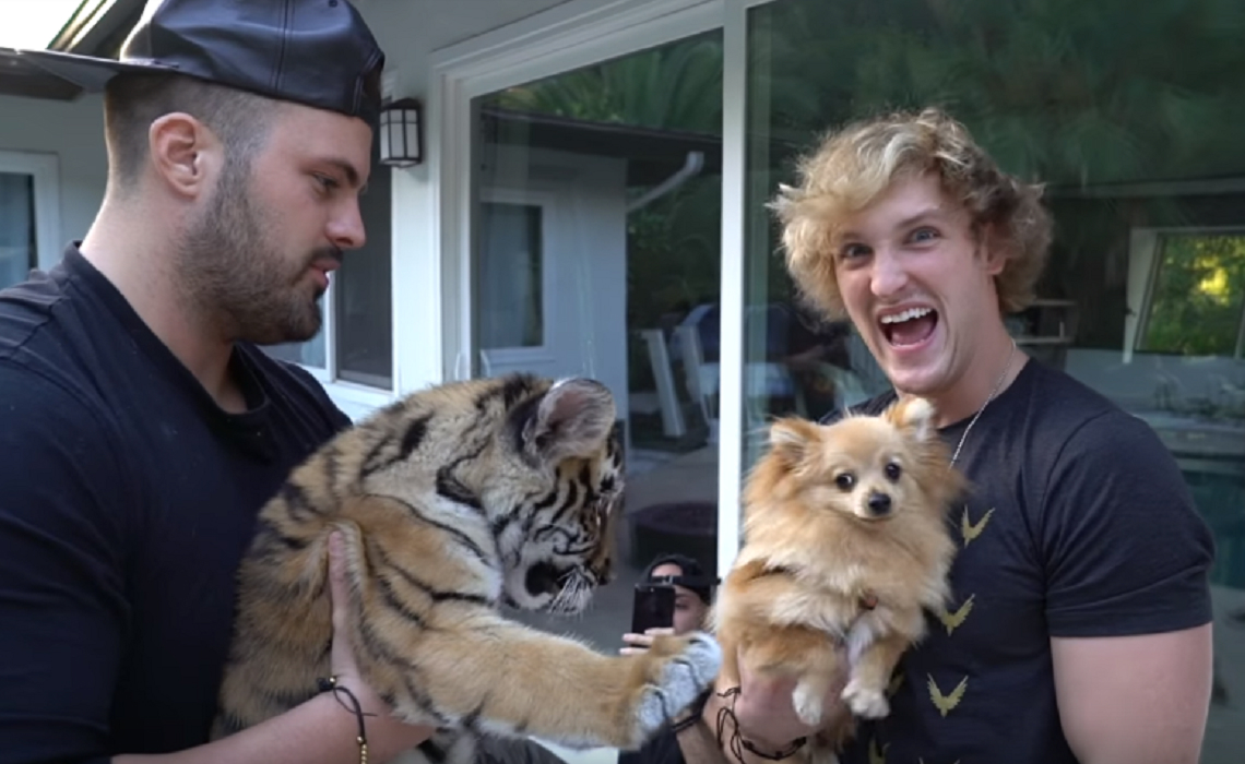 A Logan Paul Vlog Led To The Arrest Of Man Who Mistreated Baby Tiger, Investigators Say