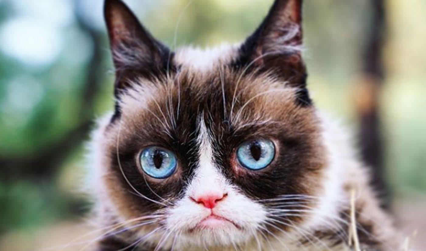 Viral Star Grumpy Cat Passes Away, Is Memorialized In Memes