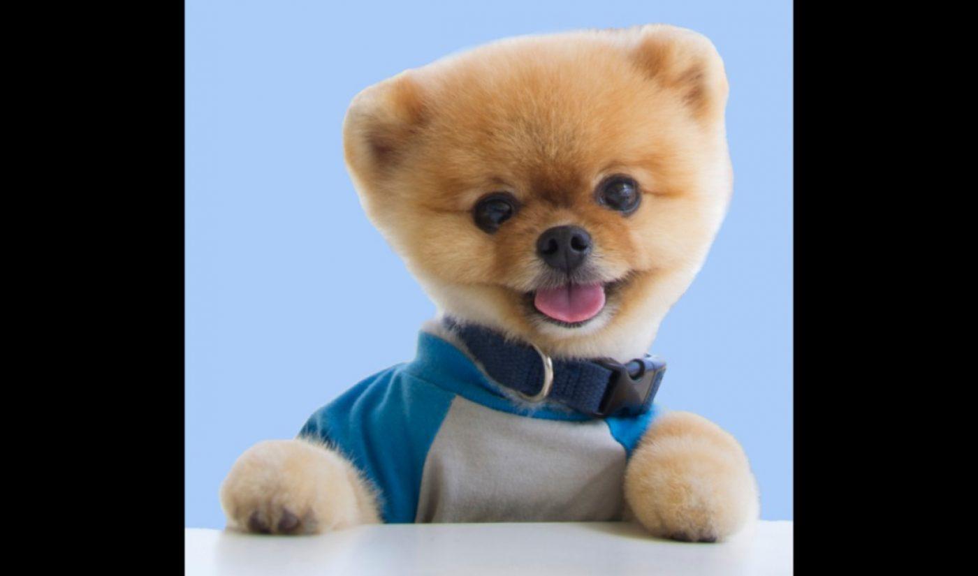 A3 Artists Signs Popular Pomeranian Jiffpom, With 20 Million TikTok Followers (Exclusive)