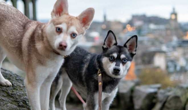 TikTok Millionaires: LifeWithKleeKai Puts Human TikTok Trends In The Paws Of Canine Companions